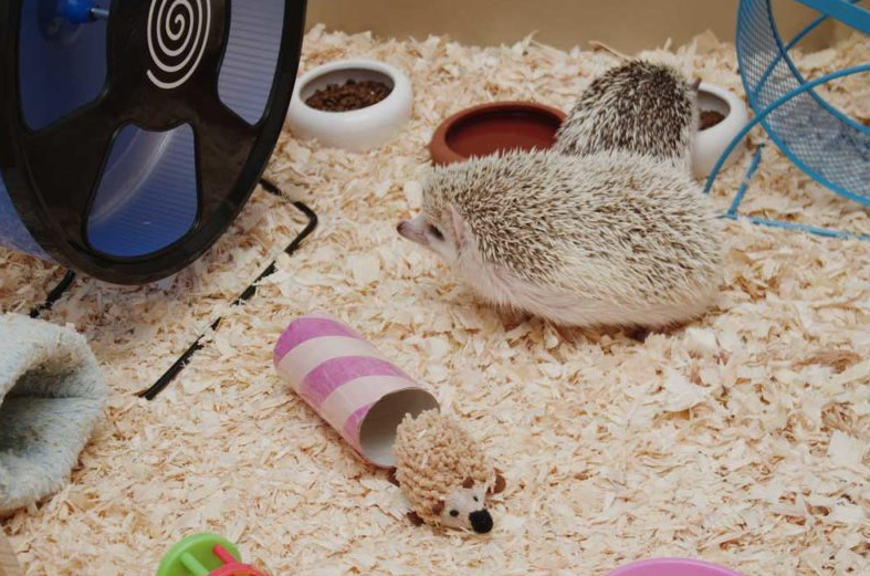 Bedding for Your Hedgehog